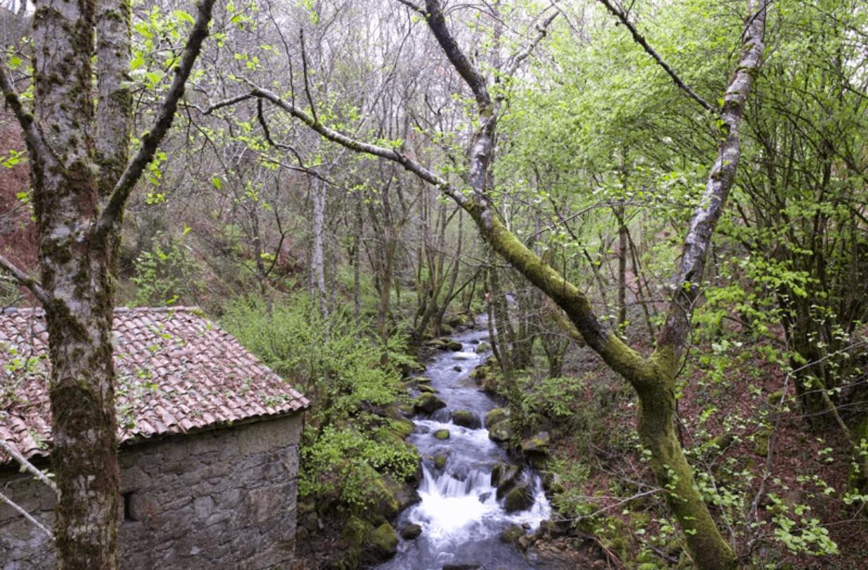 Campo Lameiro1