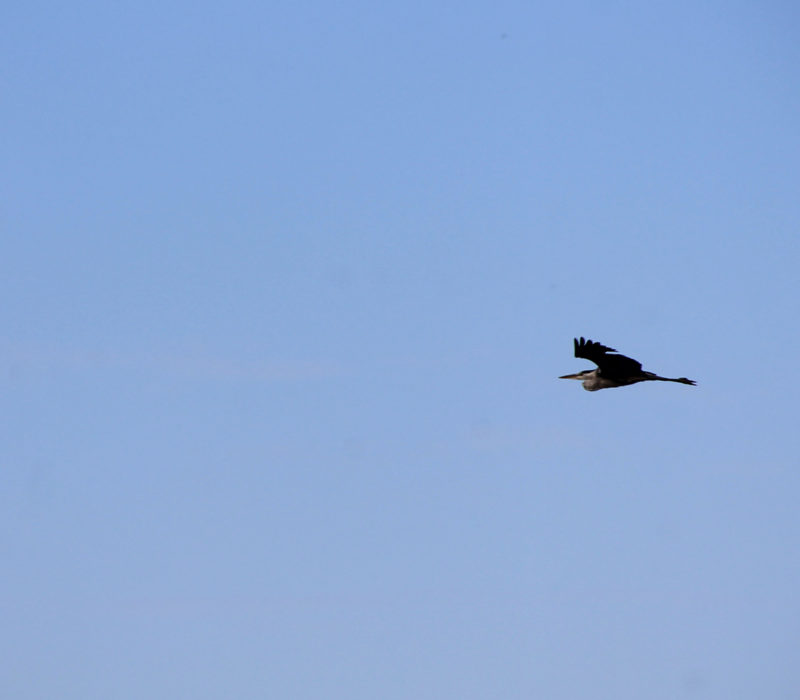 Avistamiento De Aves Pontevedra