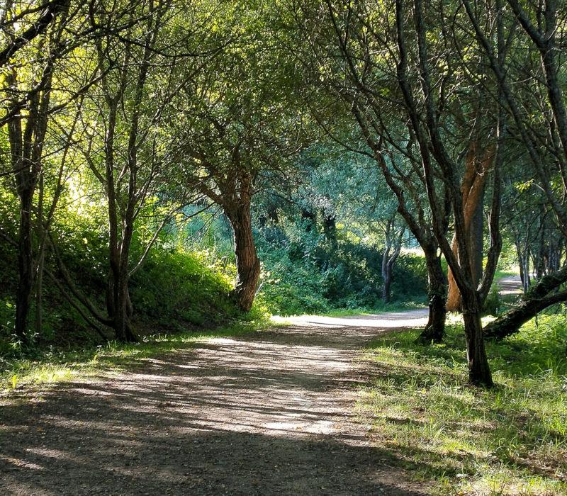 Camino De Santiago Pontevedra