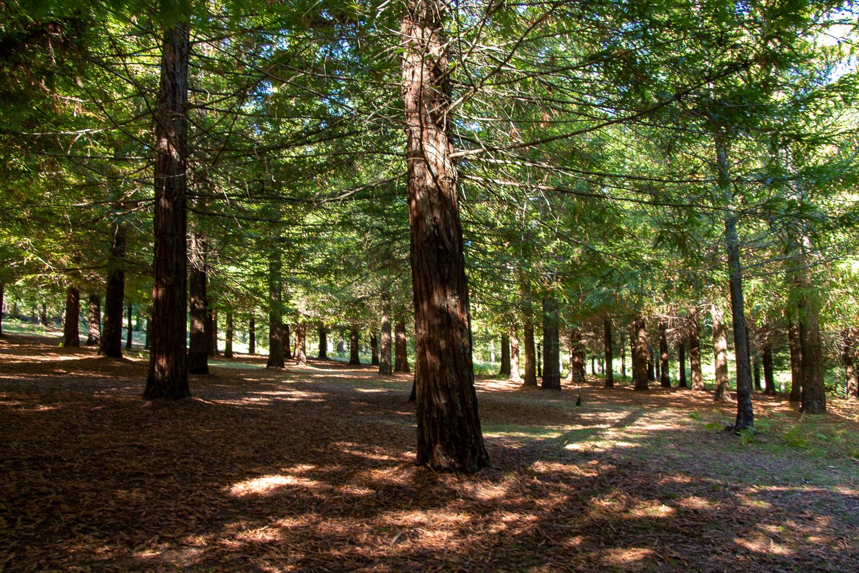 Bosque de Colón